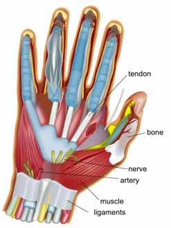 Pourquoi des gants mal ajustés peuvent provoquer des troubles musculosquelettiques (TMS) et comment les prévenir!